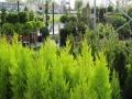 Καλλωπιστικά Φυτά